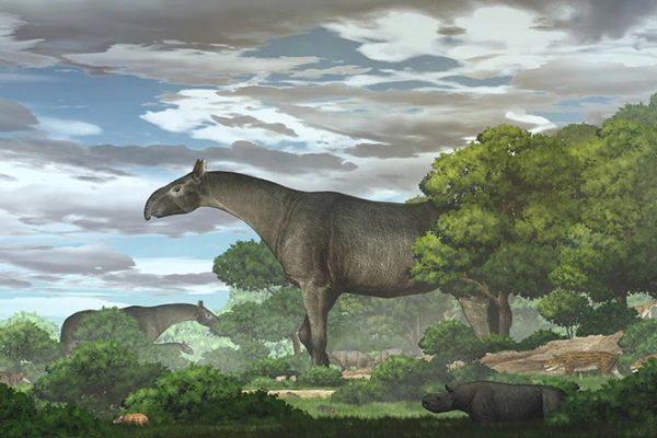 A New species of giant rhino discovered in China lived 26 million years ago