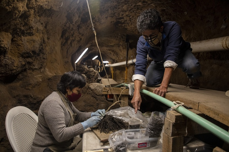 Mexico: Discovery of Bouquets of flowers left as offerings to the gods 1800 years ago