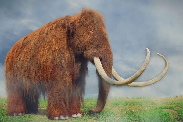Scientists Want to Bring the Woolly Mammoth Back From Extinction