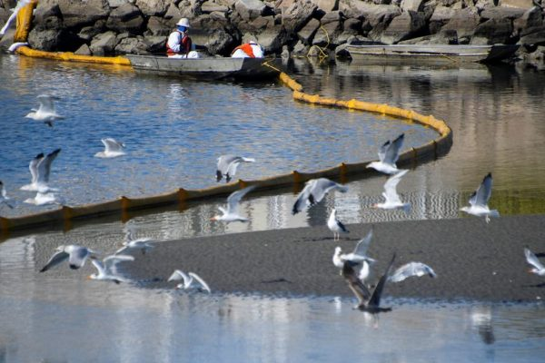 Catastrophic Oil Spill in California Ranks as One of The biggest in Decades